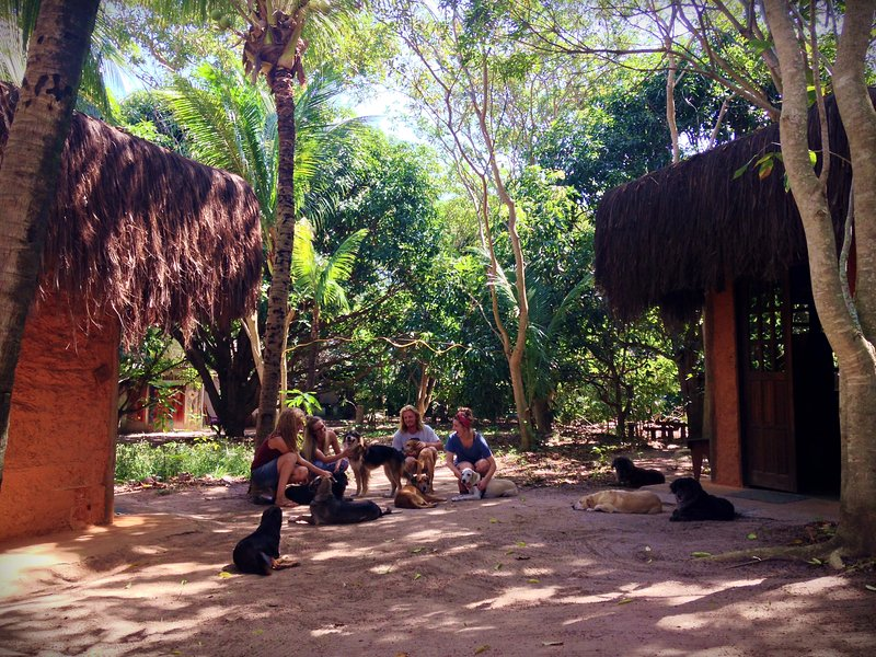 Nature Retreat with Healing Dogs in Brazil, Eco-Lodge 'Sabiá', aluguéis de temporada em Abrantes