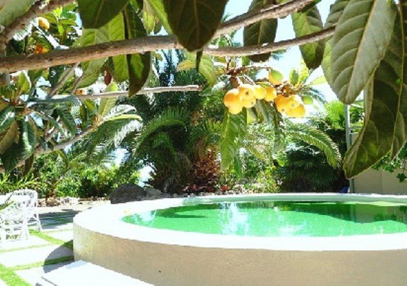 Grün lackiert Pool mit fruital Bäumen und hinter ... den Atlantischen Ozean!