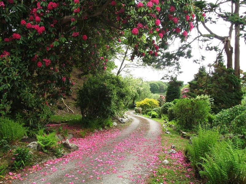 The winding drive is full of blossom in springtime