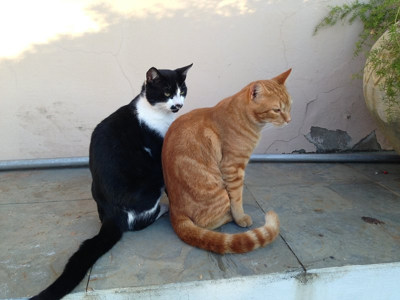 Our two cats, Reggie and Ronnie - they live outside but are very friendly
