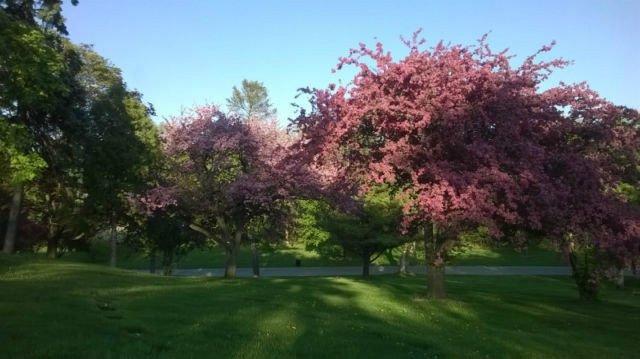 Park et Cemetry à proximité