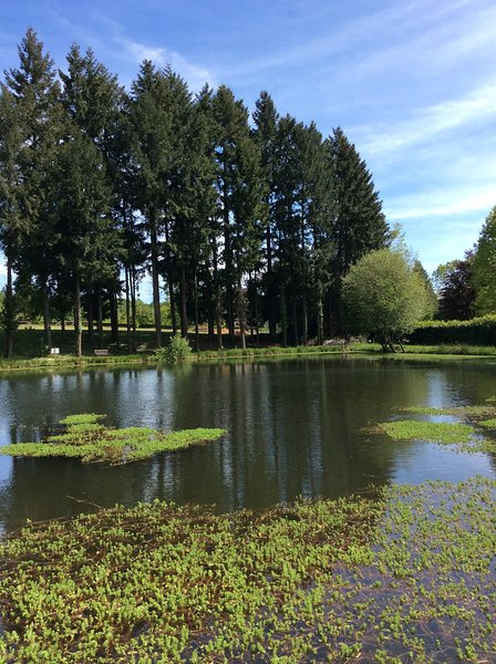 pond of 6000 m2 with 1 meter of water up to 5 meters monk