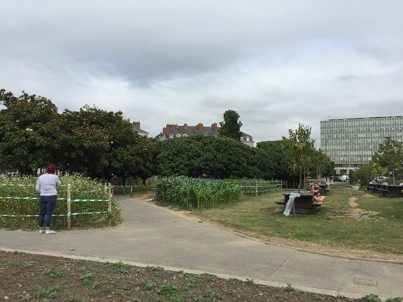 from the garden to the building in the middle and CHU and medicine fac (green building) right