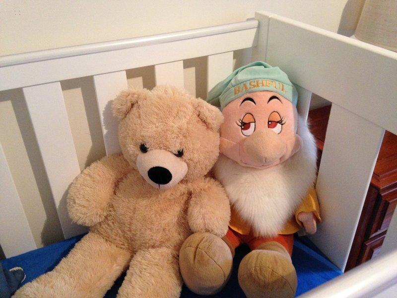 Teddy y tímido