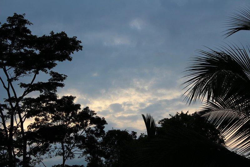 Kvällshimlen med träd silhuett ovanför poolen. Stora foto möjligheter på Emerald Estate.