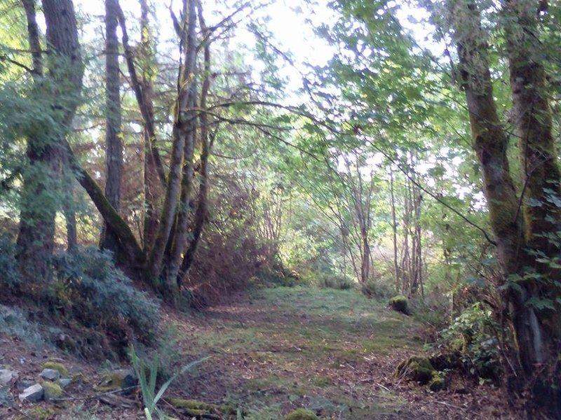 bosque en la propiedad