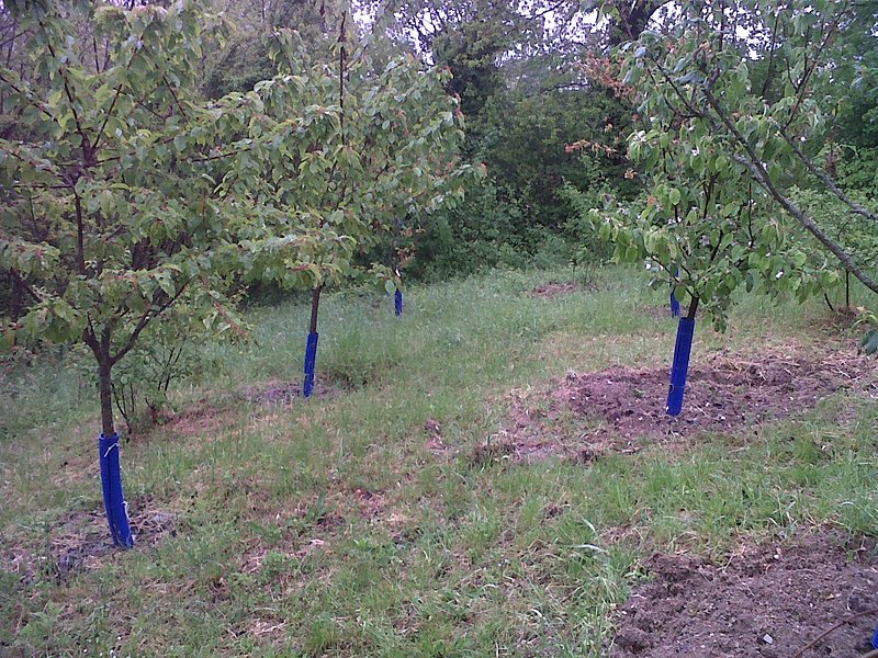 Frutteto/Fruit trees