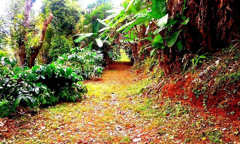 Walkway -1 inside the Coffee Estate