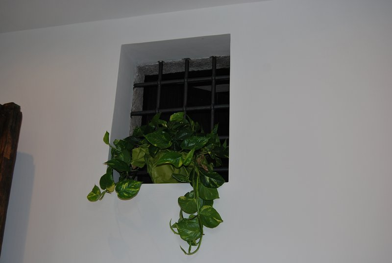 "Details - plants ""caged"""
