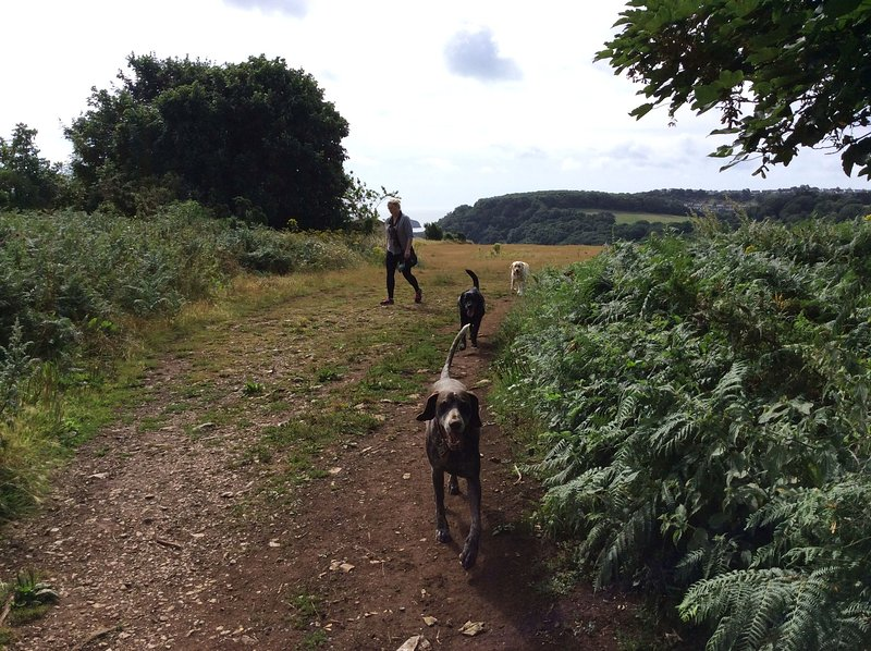 Walkies from your doorstep on Walls Hill. You will make lots of doggie friends here!