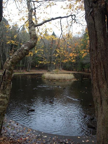 Hemlock Ravine Park - Hearth Shaped Pond