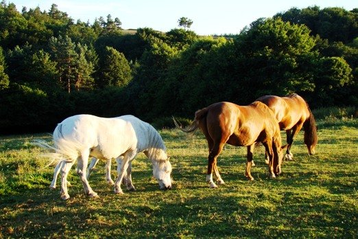 The horses that graze around the houses provide entertainment.