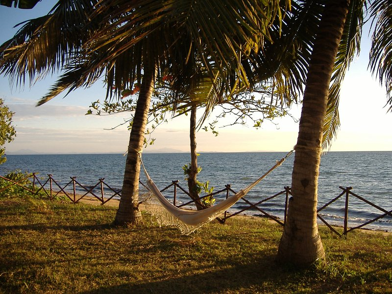 La hamaca bajo las palmeras en el jardín