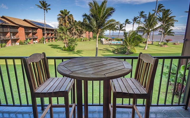 Bench,Chair,Furniture,Palm Tree,Tree