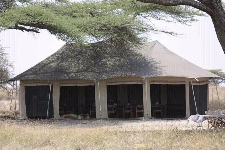 Wildlife safaris,Cultural & Beaches Holidays, vacation rental in Arusha Region