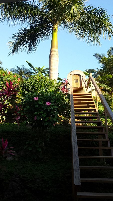Back Garden, stairs to swimming pool