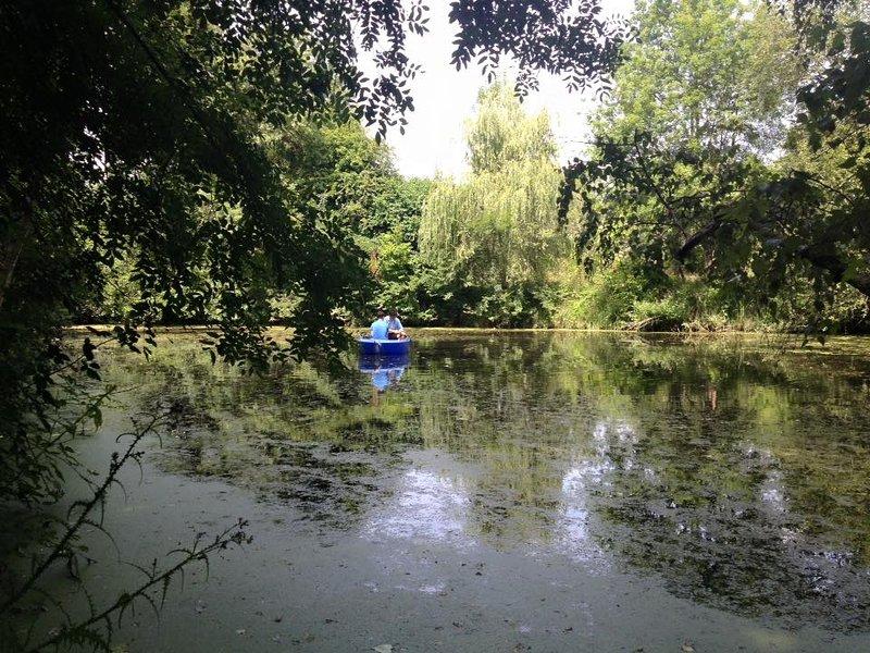 Relax na lagoa dos animais selvagens