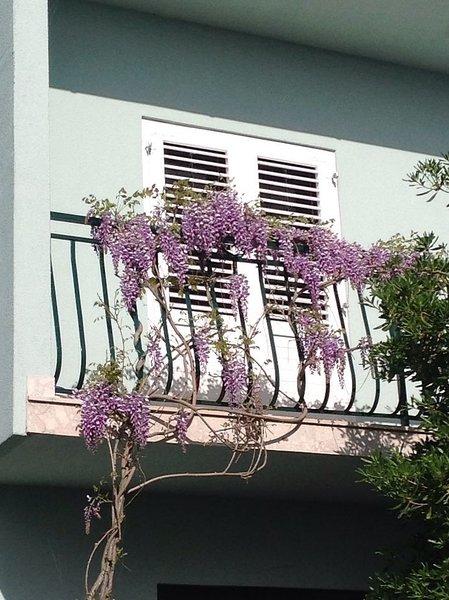 Blooming varanda