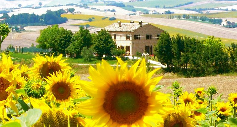 Il Casale Dorato, holiday rental in Filottrano