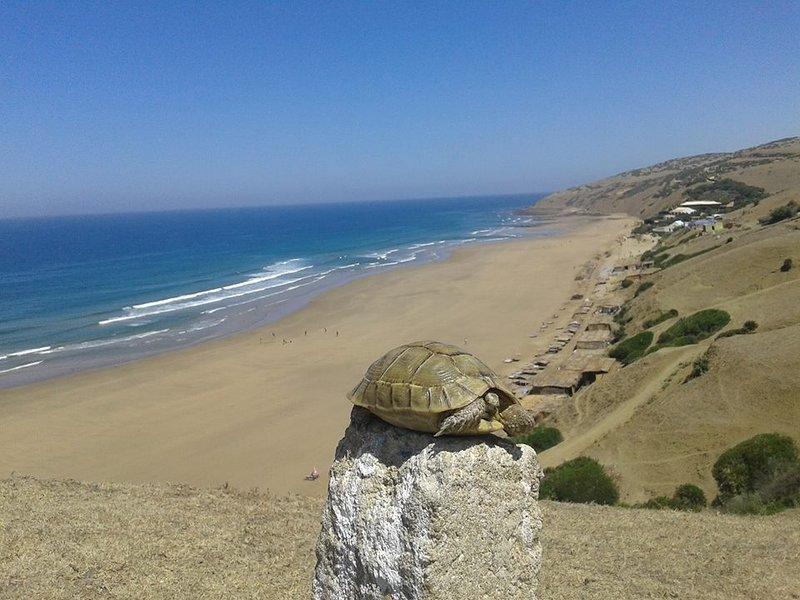 plage de Sidi Mughait 40 menthe à pied de Dar Fkrum