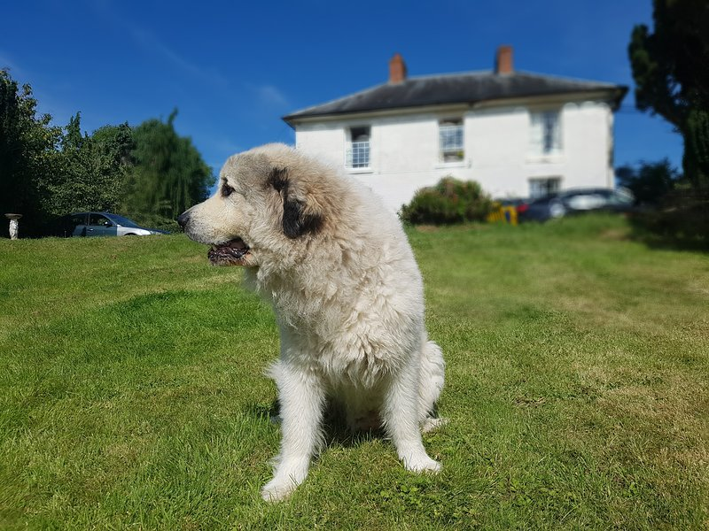 Davies Suite - Penygelli Apartments, vacation rental in Kerry