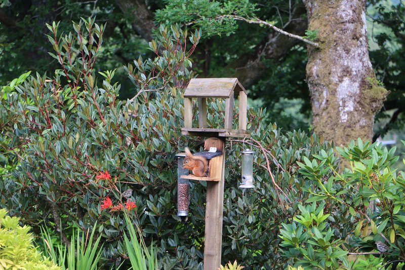 red squirrels can be seen from the upstairs windows and twin bedroom.