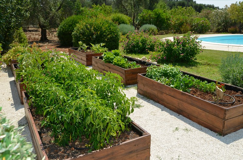 Vegetable and herb garden at your disposal