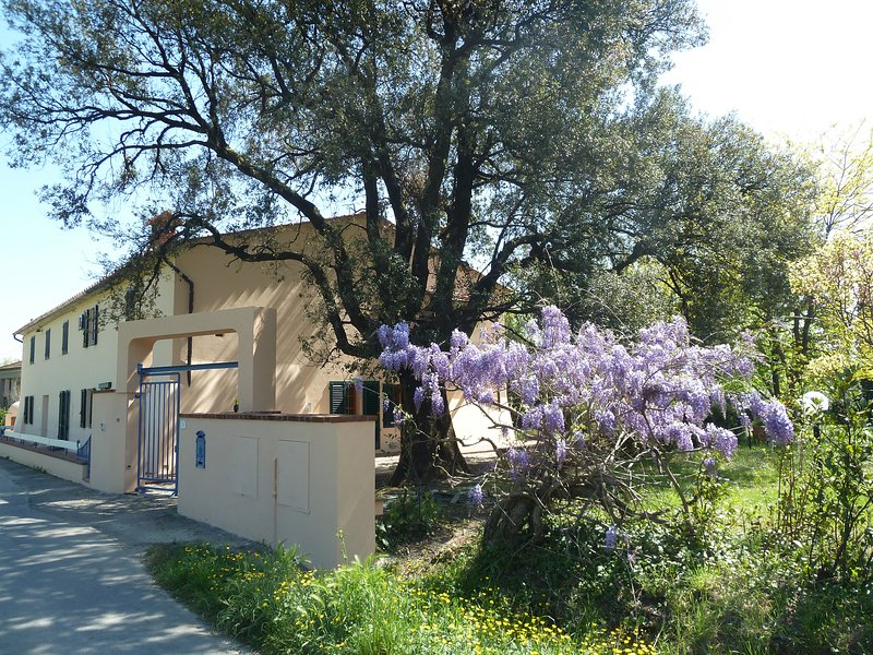THE OLD LECCIO. The house for your holiday in the heart of Tuscany