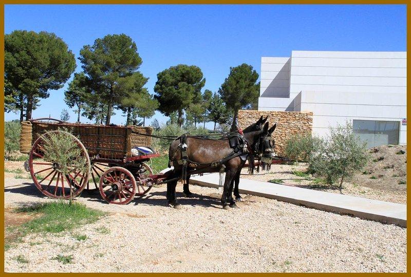 Luz de Alba: tradition and modernity