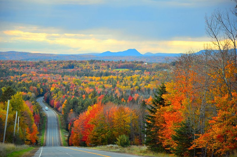 'Fall' in Love With Maine - See Our Colors Bloom!
