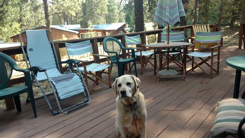 Dog friendly deck