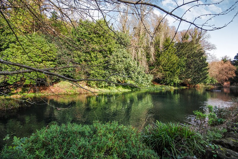 Bonchurch Pond opposite Grebe Cottage