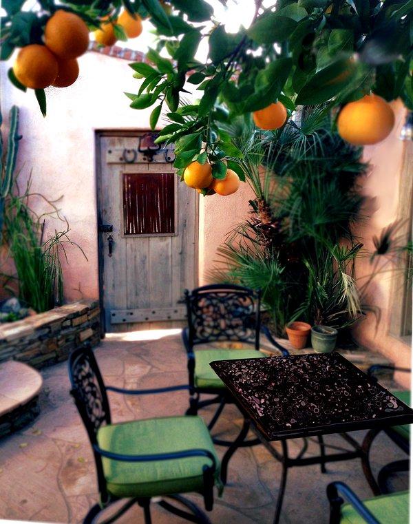 pequeno-almoço no sol sob a árvore de laranja.