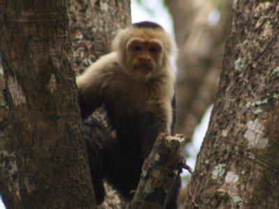L'un de nos voisins proches vus dans les arbres à côté de l'allée!