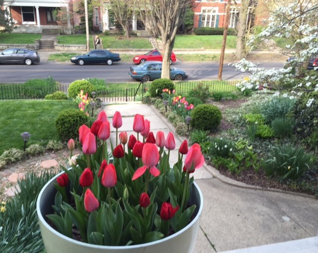 Early spring view from the front porch