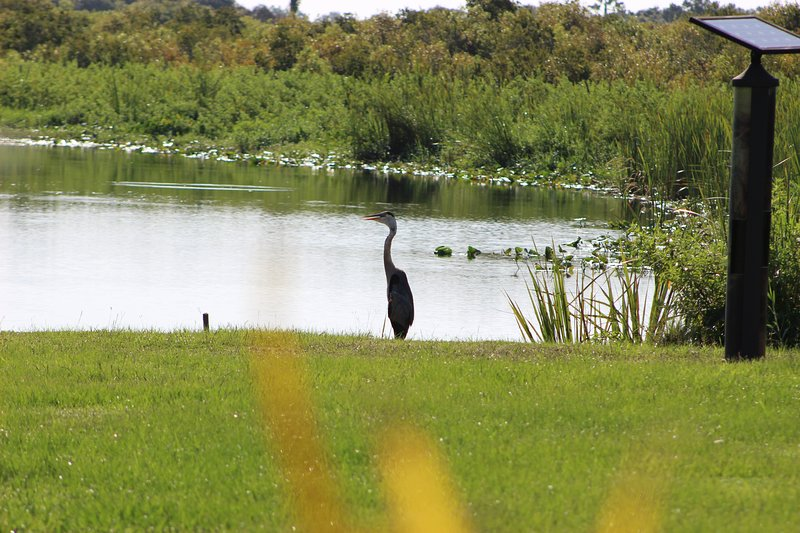 Secluded Waterfront Bird Watchers Paradise on Wildlife Sanctuary, free kayaks, vacation rental in Punta Gorda