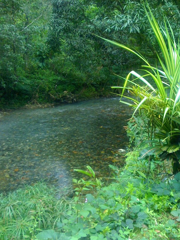 La vue de la Grande rivière de la terrasse de la piscine à Calming Waters Riverside Villa toujours rafraîchissant.