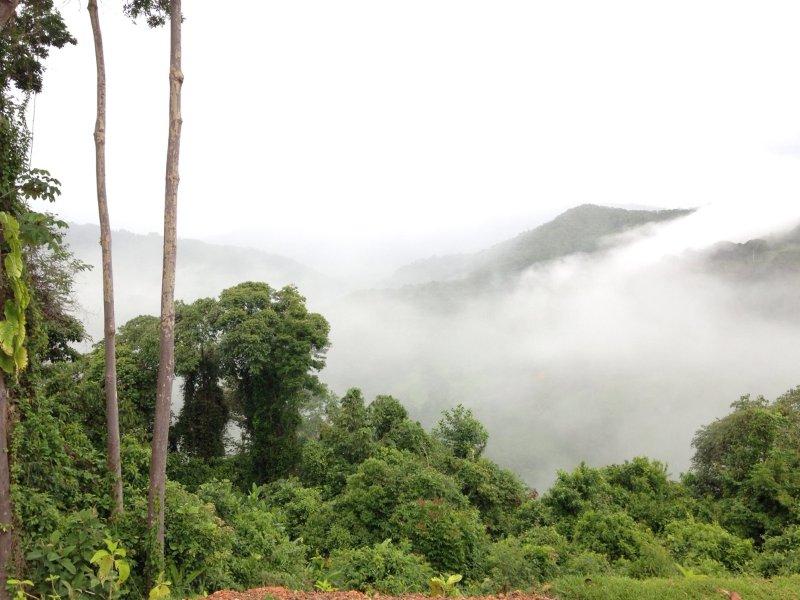 Vistas de la selva tropical