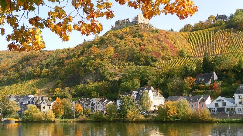 Les arbres sur «feu» en automne spectaculaire dans le Bernkastel-Kues