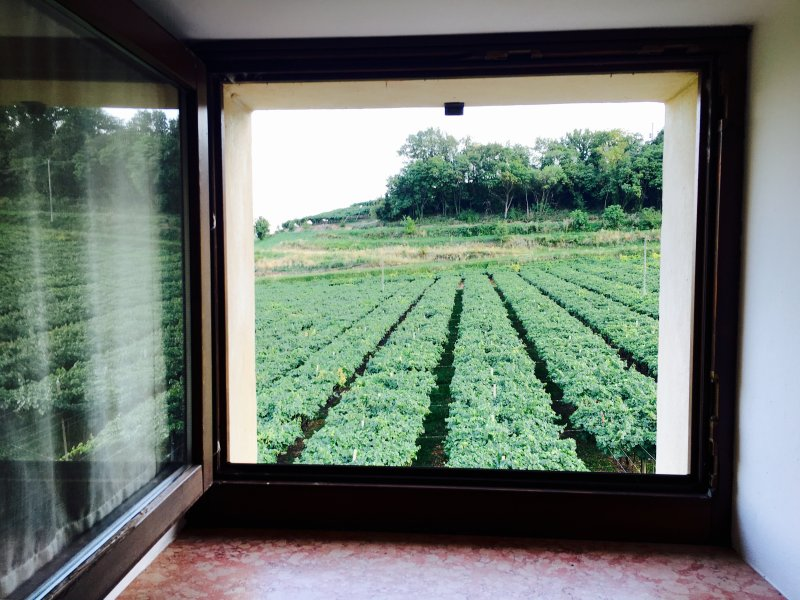 Relax in the vineyards near Verona and Vicenza, location de vacances à Lonigo