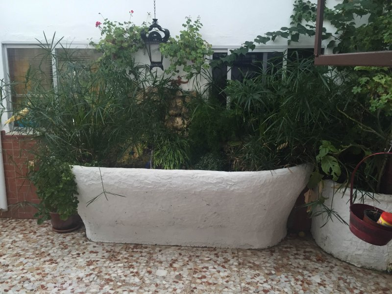 Andalusian patio source