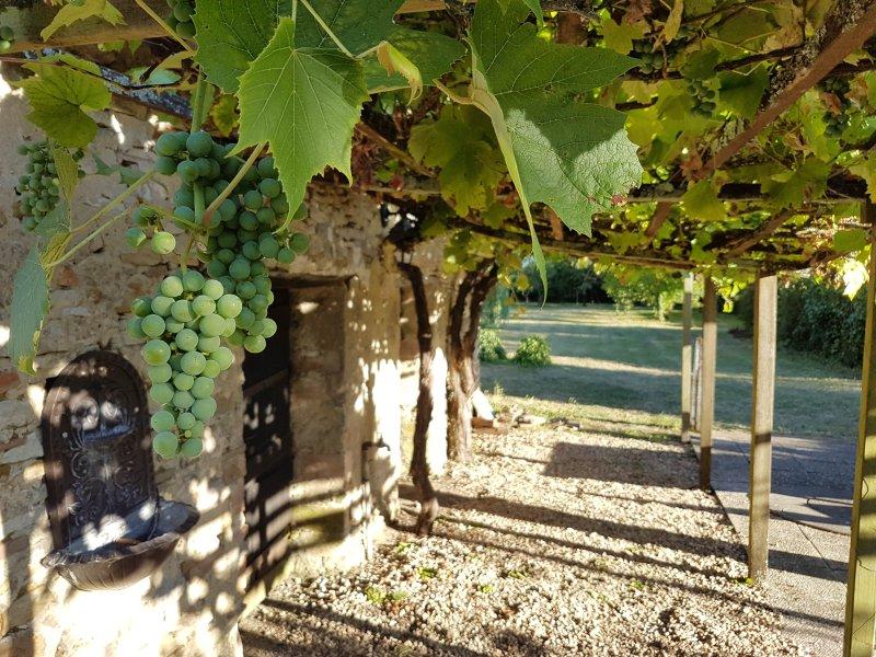 Nous cultivons nos propres raisins sur la pergola donnant sur le patio.