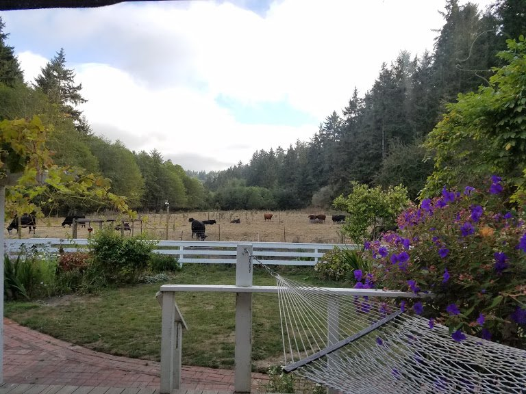 El verano y el ganado vecinos están arrendando los dos primeros pastos para algunos de última hora hierba.