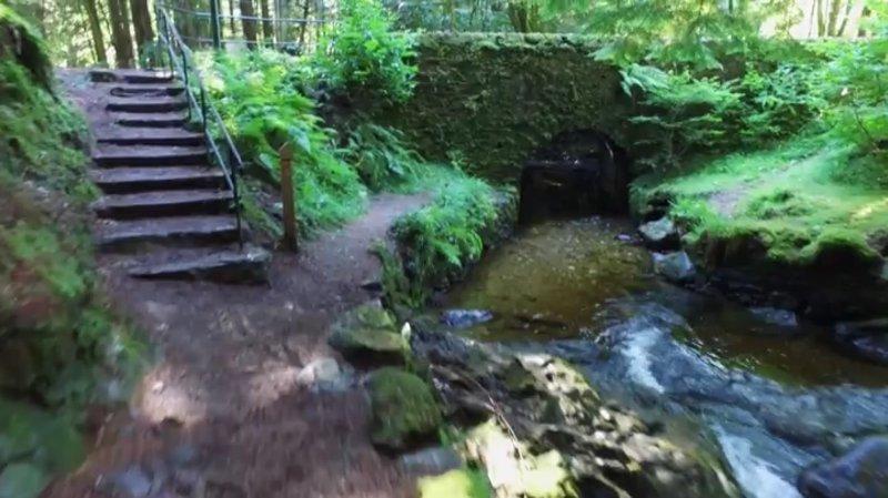 Bridge at Pucks Glen