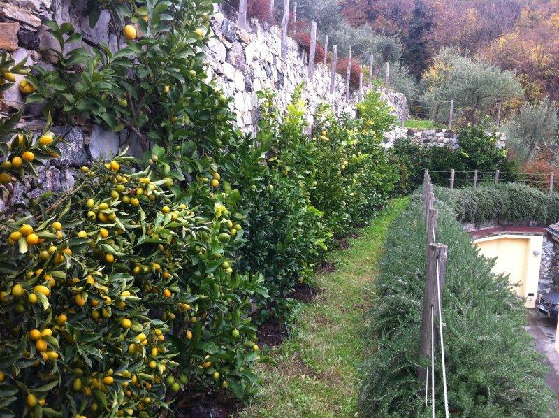 el jardín de cítricos