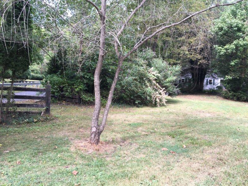 Large yard to enjoy