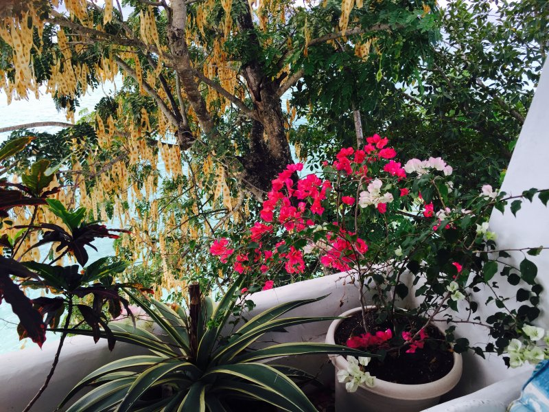 Godetevi l'albero esotico e la vita vegetale