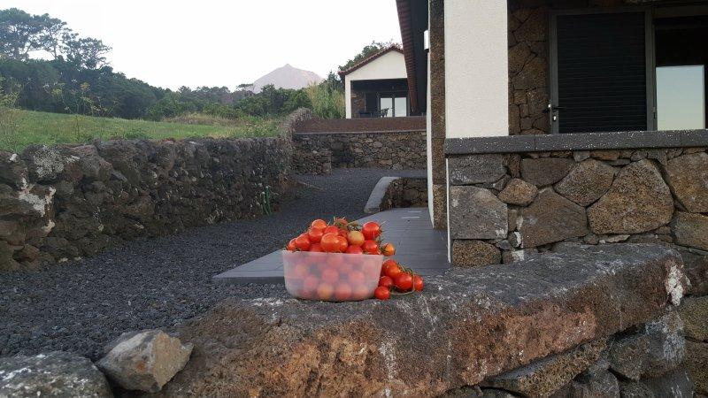 Vila Paim - T1- Modern cottage  in Pico - Great Views, location de vacances à Velas