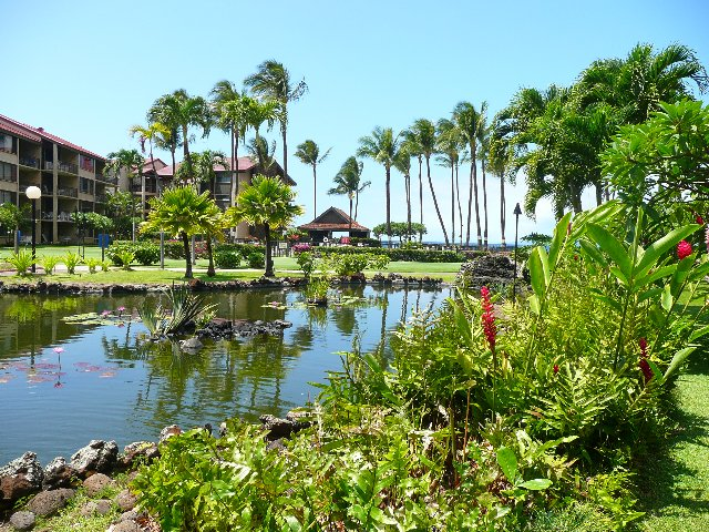 Lush gardens and koi ponds