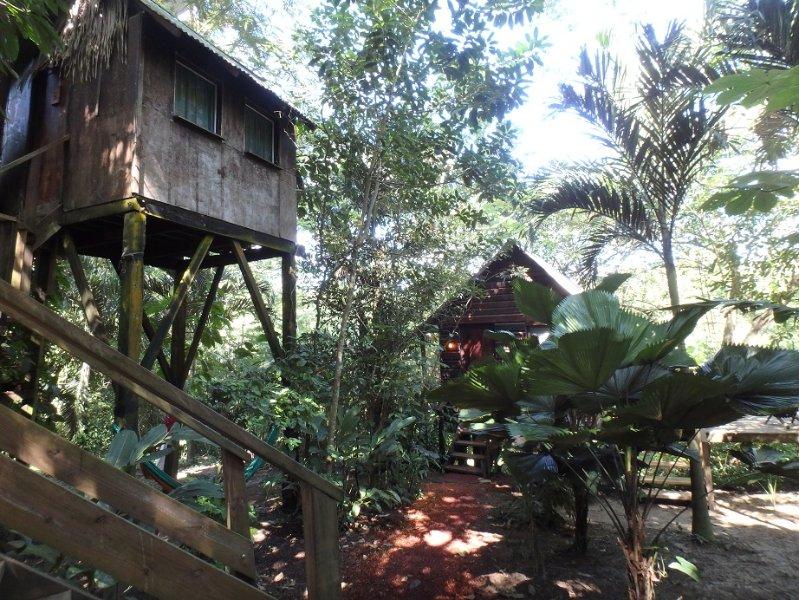 Parrot Nest Tree House 1, vacation rental in Bullet Tree Falls